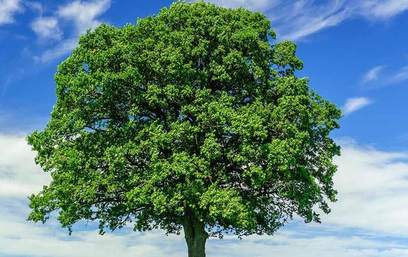 Ilustração de como transformar cinzas em árvore