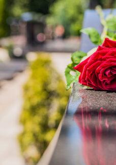 Vemos uma flor no cemitério. Entenda o que é um plano funerário e como contratar!
